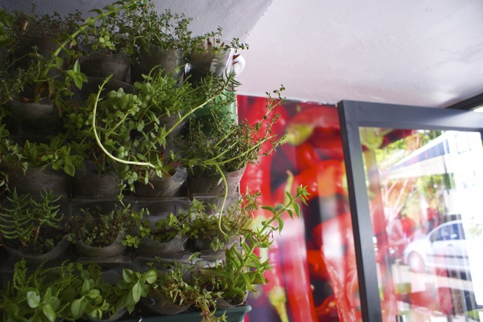 Live and Chilli Wallpaper